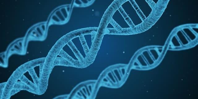 Gene der Frau entschlüsselt
